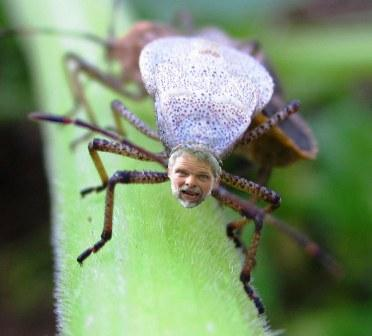 Craw-daddy
