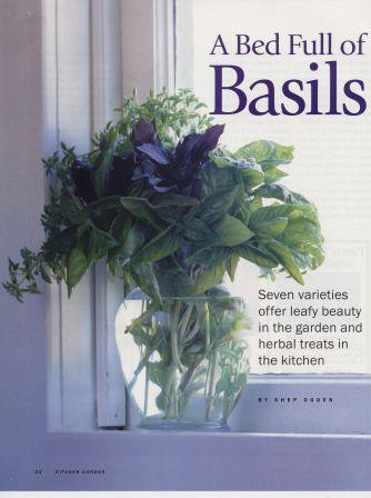 KG9608-Basil2