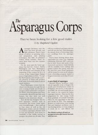 NG9003-Asparagus2