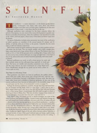 NG9505-Sunflowers2