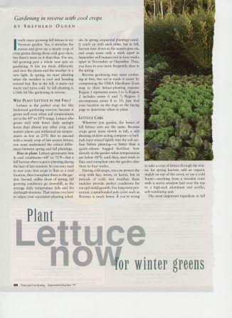 NG9709-Lettuce2